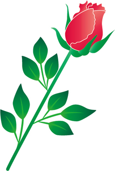 A red rose bud