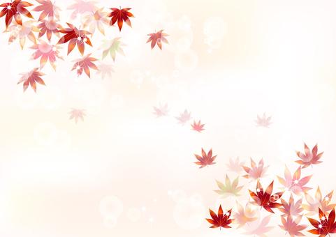 Fall pattern Maple 7