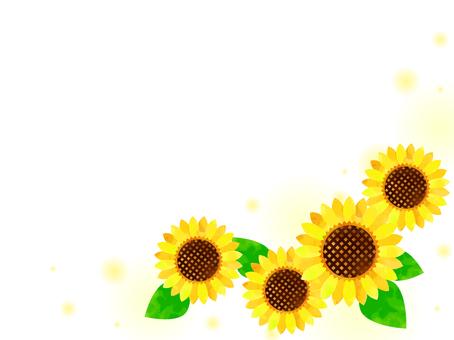Sunflower 06