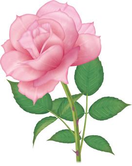 Rose / 3