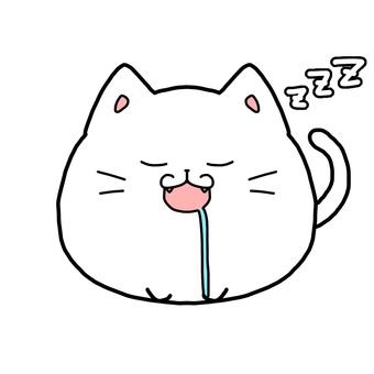 White cat sleep