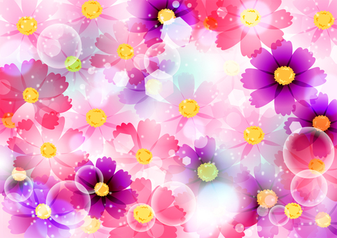 玻璃紙樣式波斯菊背景