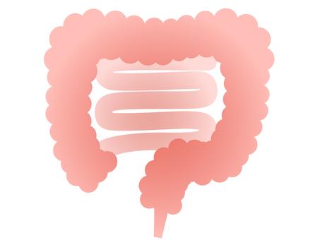 ai Intestine · large intestine illustration