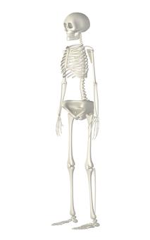 Skeleton - diagonally before _ 001