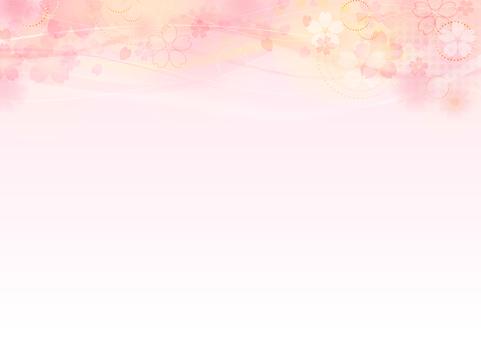 Cherry blossoms 135