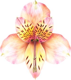 Real alstroemeria flower 1 point