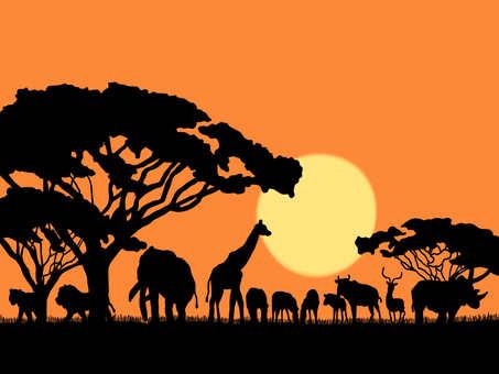 아프리카 실루엣
