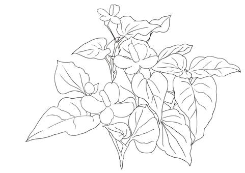 Dokudami (coloring)