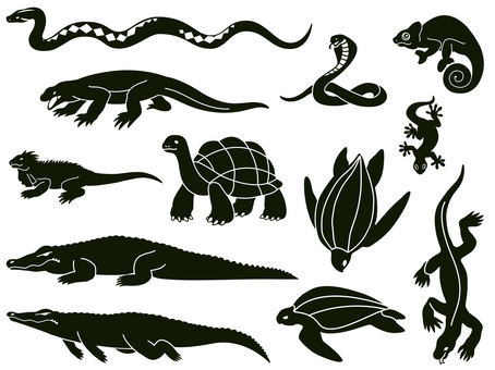 Animal - Reptile