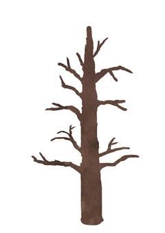 針葉樹 -枝- ③ 植物 水