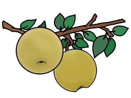 Pear tree and fruit (with leaves)