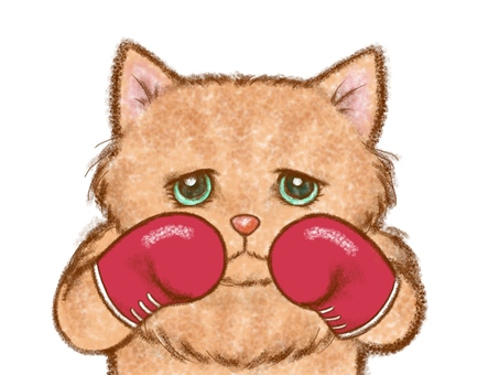 Cat boxer in fighting pose