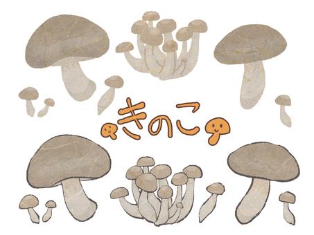 Mushroom Japanese style texture