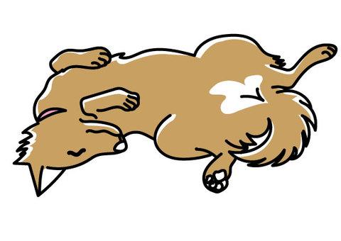Sleeping dog-03