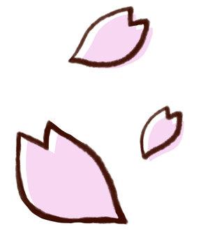 Cherry blossom petals 04