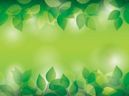 新緑イメージ背景イラスト