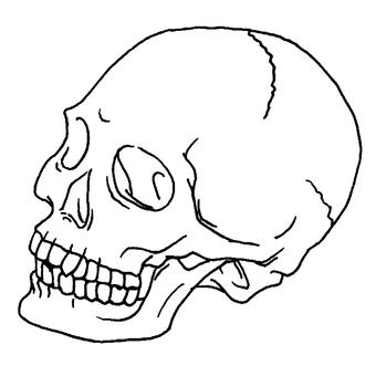 Skull (white)