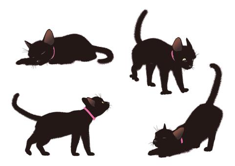 Black Cat Pose 001