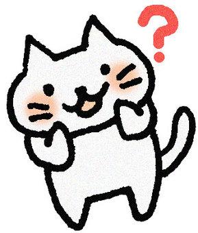 Doubtful cat