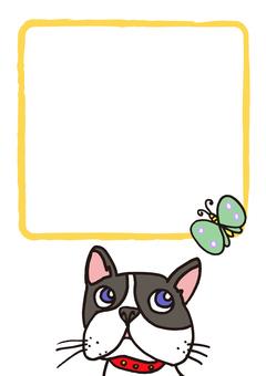 dog_ French bulldog 17