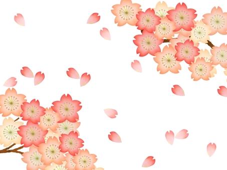 Cherry blossoms ①