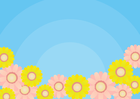 Background Gerbera blue sky