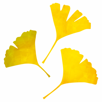 Yellow leaves / ginkgo