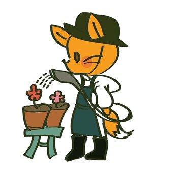 Watering fox