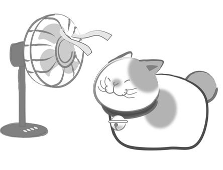 Sumi cats - Fans