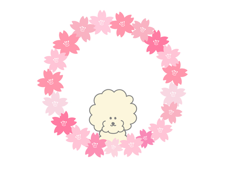 Cherry and toy poodle frames