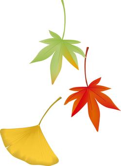 Autumn _ Maple