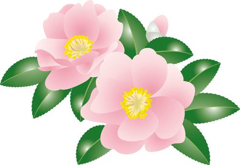 Cut _ mountain flower 2
