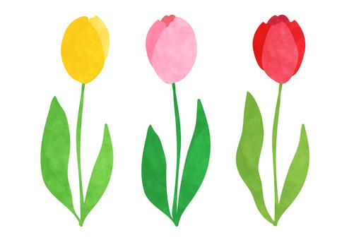 Water color three color tulip