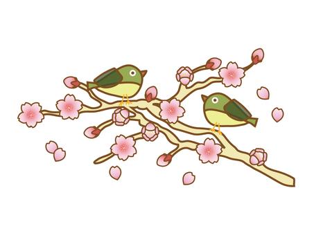 Sakura & Mejiro