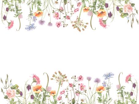 Flower frame 257 - Orange-colored poppy flower frame