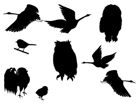 A set of birds with various silhouettes