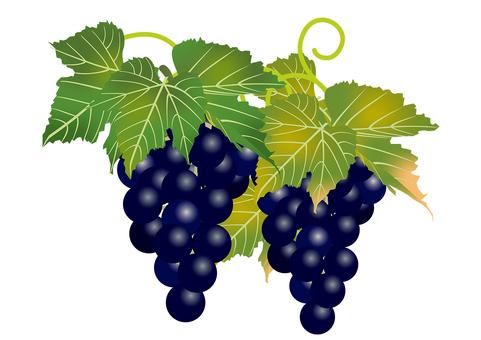 Delicious grape 13