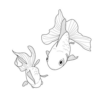 금붕어 (흑백)