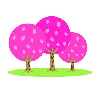 Cherry tree 1