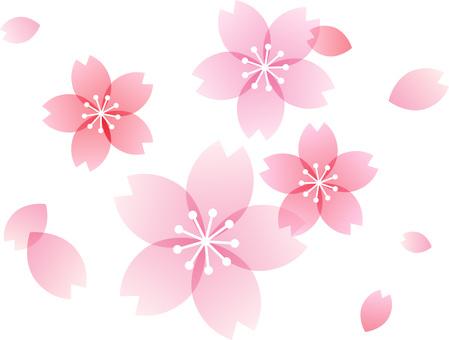 200201. 벚꽃 9