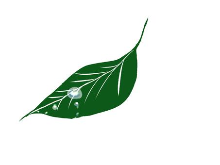 葉子/水滴