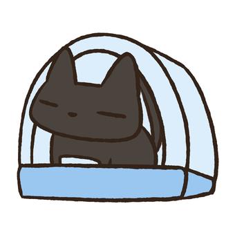 Black cat ⑧