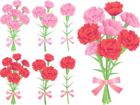 70405, Carnation, Set