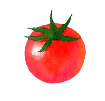 Watercolor Food Series Petit Tomato