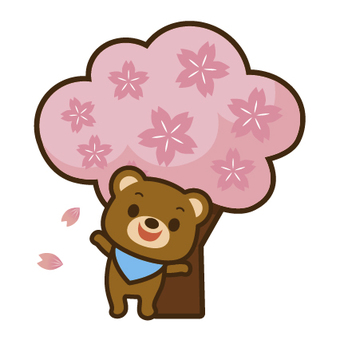 Kuma and cherry blossoms