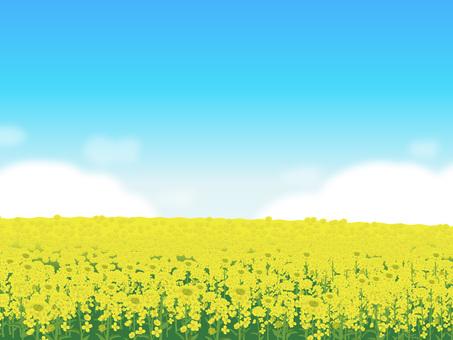 Rape flower's landscape Landscape 06