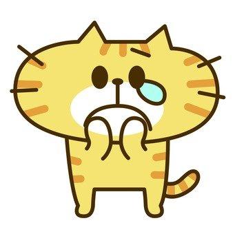 고양이 눈물