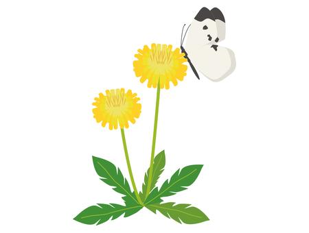 민들레 배추 흰나비