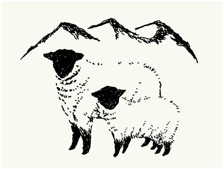 Handwritten sheep