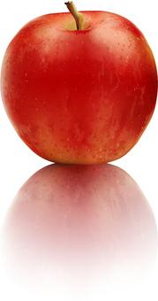 리얼 빨간 사과